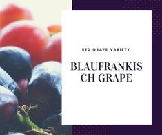 Blaufrankisch Grape