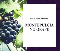 Montepulciano Grape