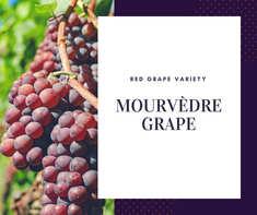 Mourvedre Grape