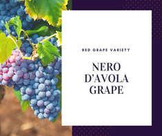 Nero d Avola Grape