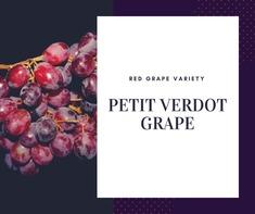Petit Verdot Grape