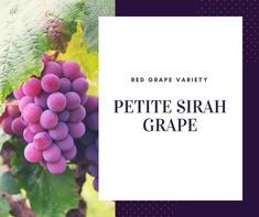 Petite Sirah Grape