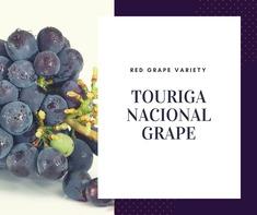 Touriga Nacional Grape