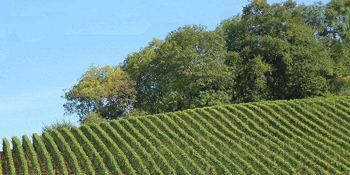 Wine Regions of the USA