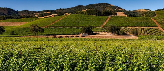 Photo for: An Introduction to the Top 10 Wine Regions of the USA