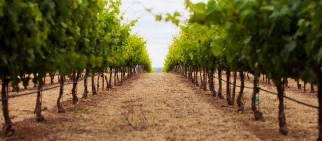 Photo for: Winery from California's Coastal Range