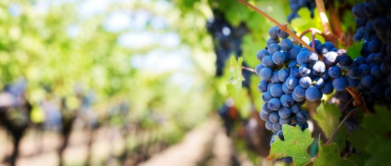 Photo for: Wines of California: A Brief Guide